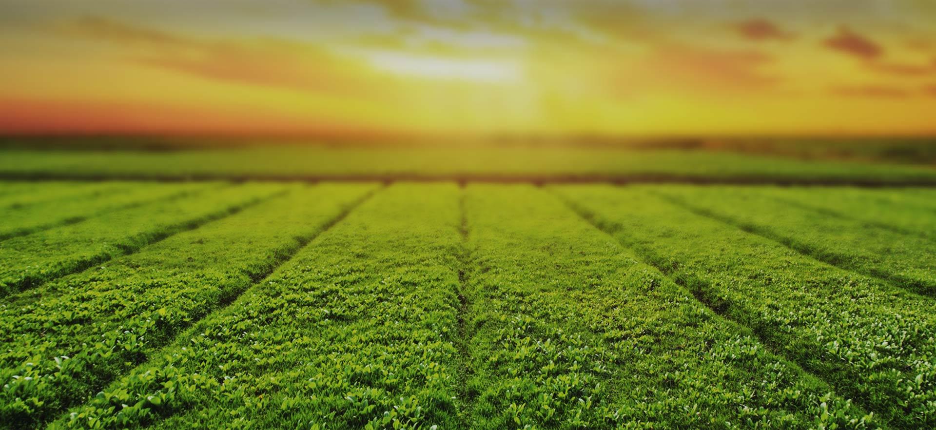 共享全球優質水果、生鮮資源